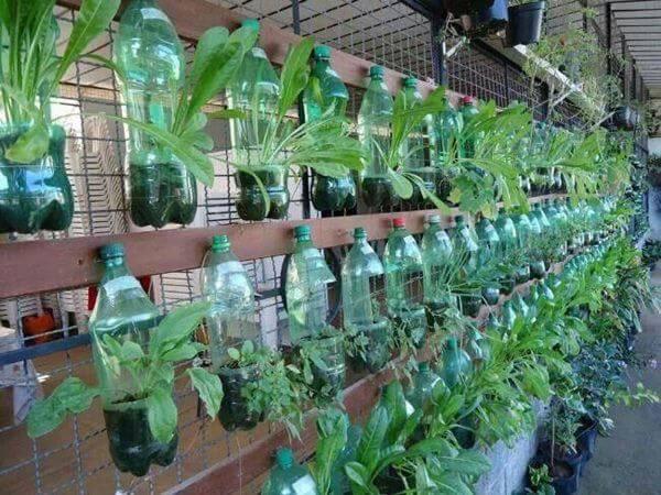 Bạn có thể cắt chai và trồng cây theo cách dưới đây để giữ ẩm tối đa cho đất