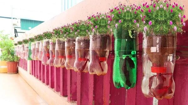 Bạn cũng có thể trồng hoa trong chai nhựa