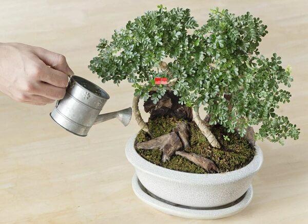 bình xịt tưới cây kích thước nhỏ là lựa chọn hoàn hảo để chăm sóc số lượng ít cây, hoa trang trí nhà