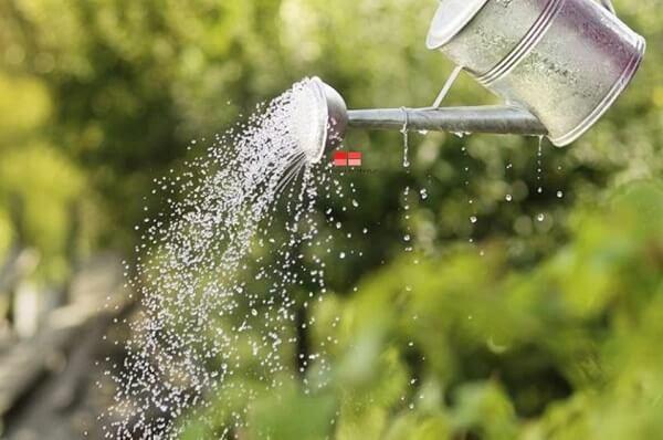 Bình xịt tưới nước cho cây thường được làm từ nhựa hoặc kim loại