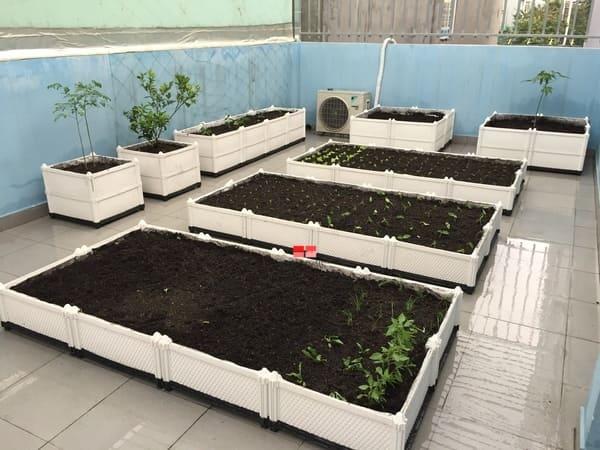 Chậu trồng rau chuyên dụng