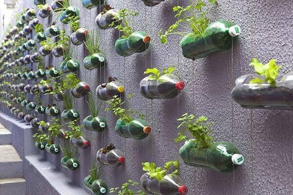 Loại cây phù hợp để trồng trong chai nhựa là cây giống loại nhỏ, rau thơm, hoa