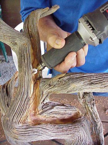 Nên cẩn thận với lũa bonsai