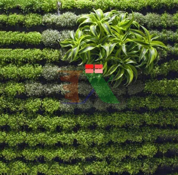 túi vải trồng cây mua ở đâu