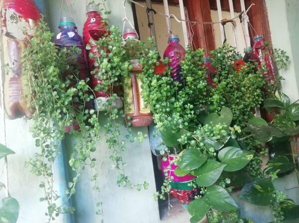 Nhà thêm xanh với cây cảnh trồng trong chai nhựa
