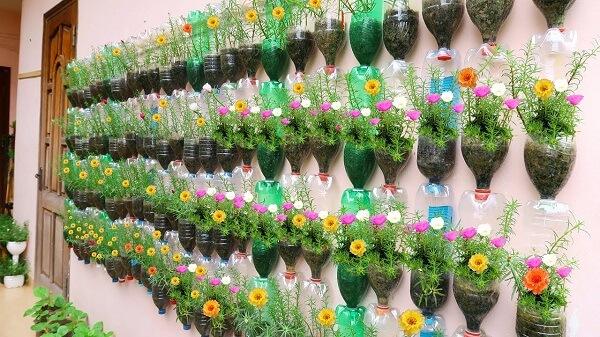 Những bông hoa nhí xinh xắn nở rộ chào ngày mới
