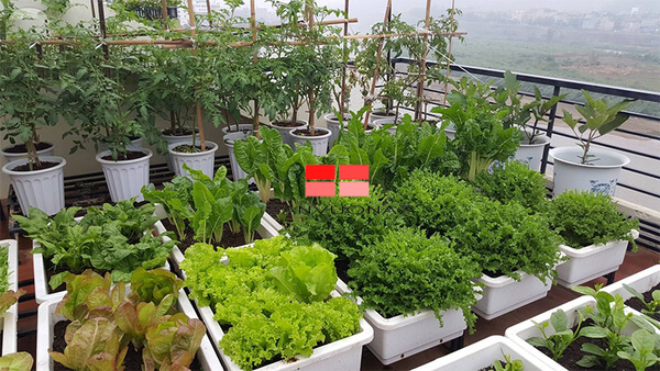 Những điều cần lưu ý khi trồng cây trong thùng xốp