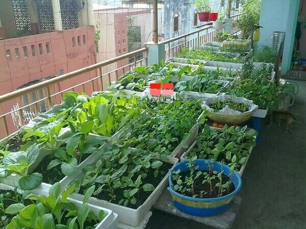 Những dụng cụ trồng rau không thể thiếu