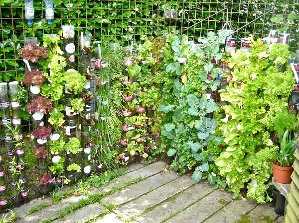 Rau xanh cũng có thể trở thành cây cảnh làm đẹp không gian sống