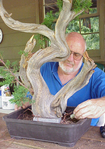 Thêm đất trồng cây cảnh vào chậu bonsai