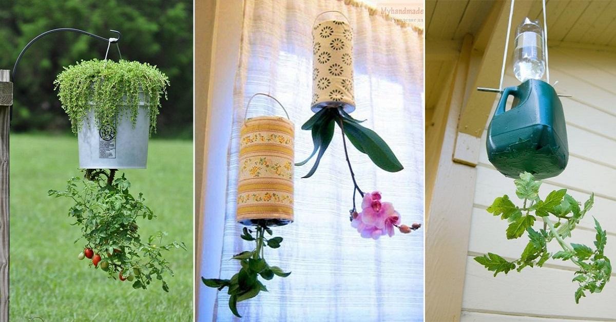 trồng rau bằng chai nhựa