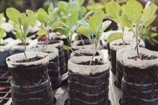 Trồng rau bằng chai nhựa giúp bảo vệ môi trường
