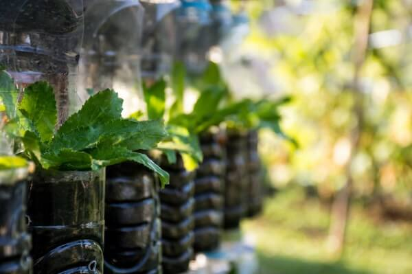 Trồng rau trong chai nhựa bảo vệ sức khoẻ cả gia đình