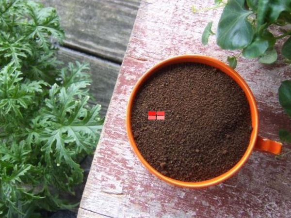 Bã cà phê giúp xua đuổi kiến, ốc, sên, mèo,... và là thức ăn yêu thích của giun