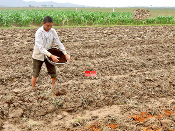 Bón phân hữu cơ để tăng cường dinh dưỡng cho đất