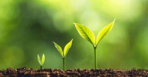 cách xử lý đất trước khi trồng cây