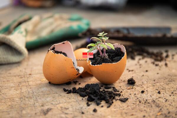 Gieo hạt trong vỏ trứng có thể ảnh hưởng đến sự phát triển của cây