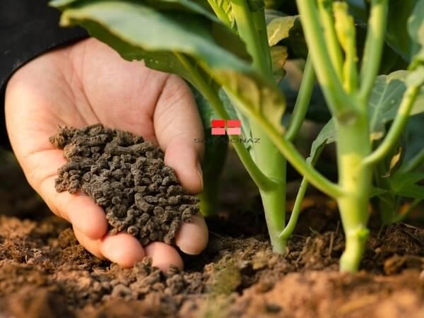 Phân hữu cơ vừa tốt cho cây trồng vừa giúp bảo vệ môi trường
