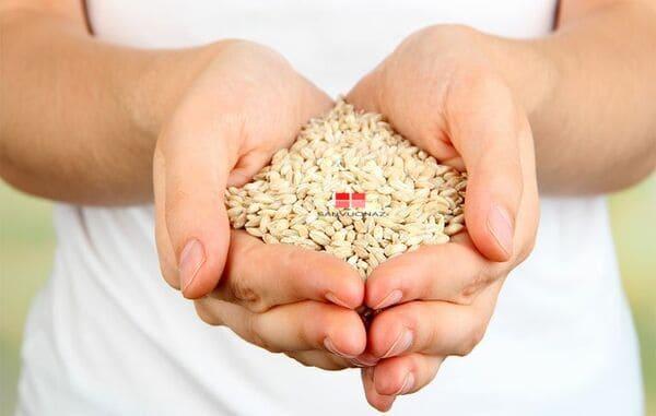 Phơi khô hạt giống giúp hạt tránh khỏi ẩm, mốc, sâu bệnh