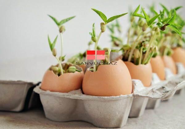 Sử dụng vỏ trứng để ươm hạt là một cách dùng rác nhà bếp trồng cây hiệu quả