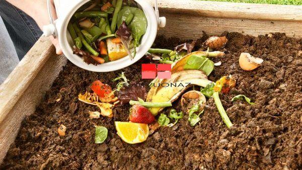 Ủ phân hữu cơ là cách dùng rác nhà bếp để trồng cây tuyệt vời