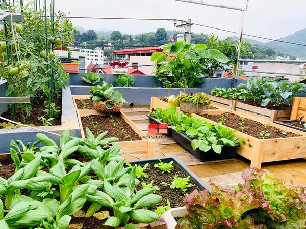 Vườn rau của dân thành phố