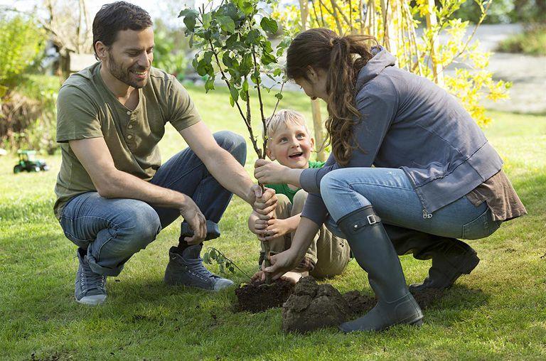 Thú vui trồng cây quanh nhà, trị liệu tâm lý cực hiệu quả