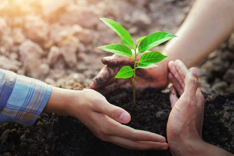 Làm vườn giúp giảm căng thẳng và lo lắng