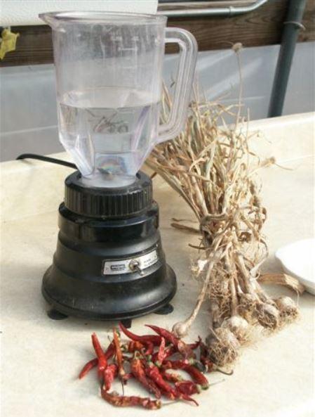 Chuẩn bị đầy đủ tỏi, ớt, nước và nước rửa chén để pha chế thuốc trừ sâu