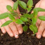 Đất tribat - Đất trồng cây cho nhà mặt phố