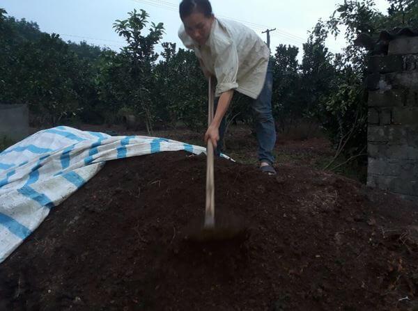Ủ phân chuồng giúp loại bỏ mầm bệnh, cỏ dại lẫn trong phân