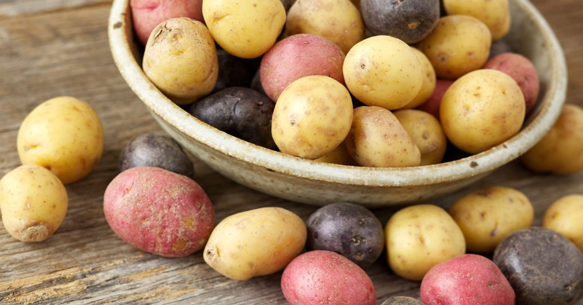 các loại rau dễ trồng ăn quanh năm