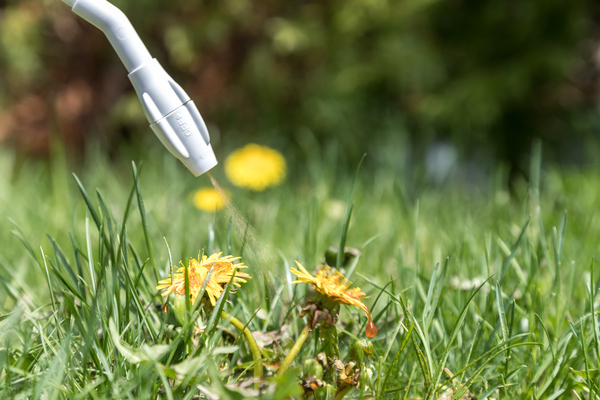 Thuốc diệt cỏ sinh học an toàn với người và các loại động vật