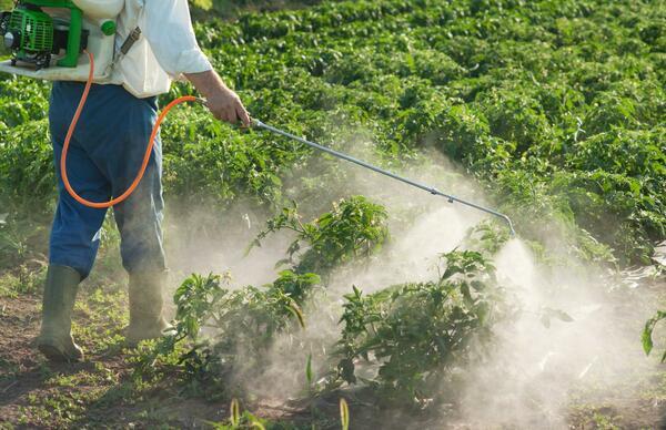 Thuốc diệt cỏ sinh học có thành phần là các vi sinh vật có tác dụng diệt cỏ dại