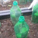 Cách trồng bí đỏ