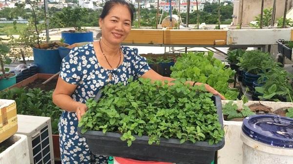 Cách trồng rau húng lủi tại nhà