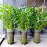 Cách trồng rau thủy canh bằng chai nhựa