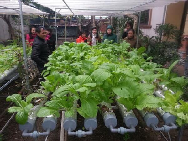 Cơ chế hoạt động của hệ thống trồng rau thủy canh hồi lưu
