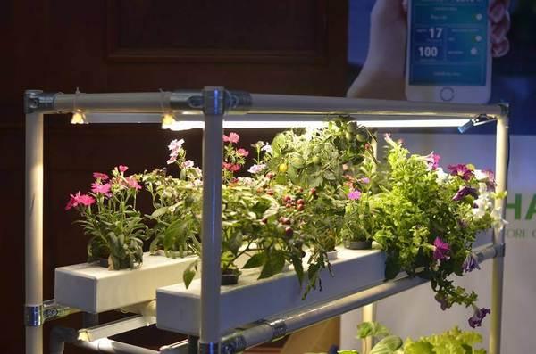 Đèn trồng cây giúp cây được trồng trong nhà phát triển nhanh hơn