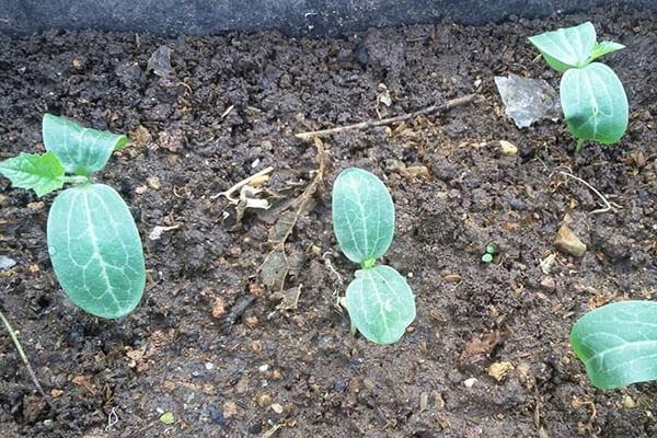 Gieo hạt giống