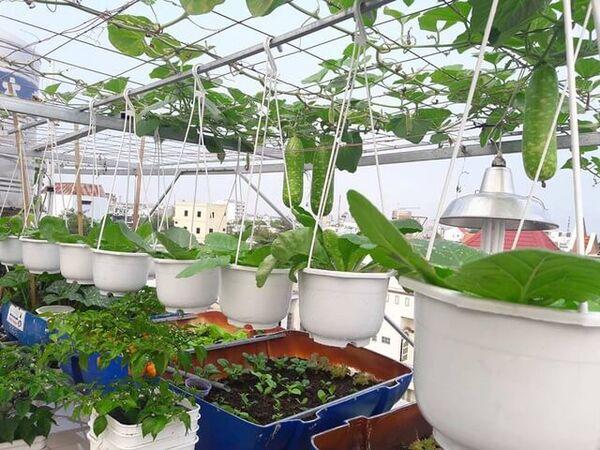 Hướng dẫn cách trồng bầu trong thùng xốp