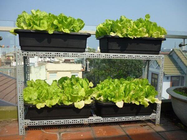 Thùng trồng xà lách xoăn