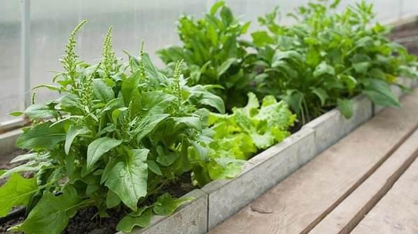 Trồng cây, rau trong nhà - Có nhiều điều cần lưu ý
