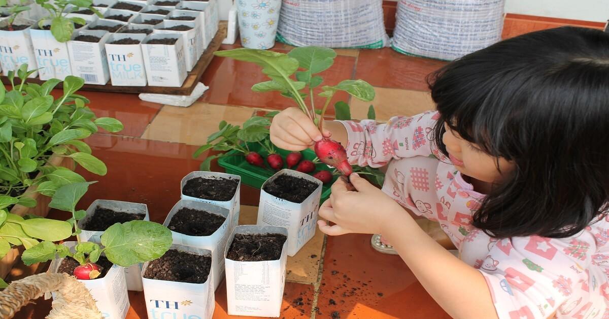 cách trồng củ cải đỏ