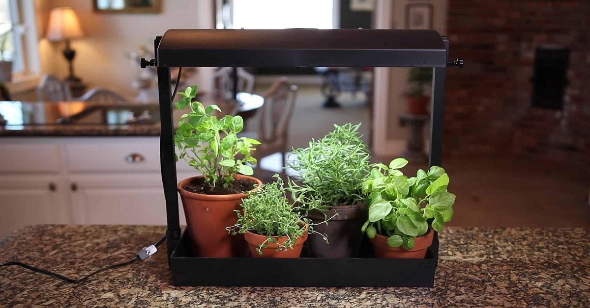 trồng rau trong nhà