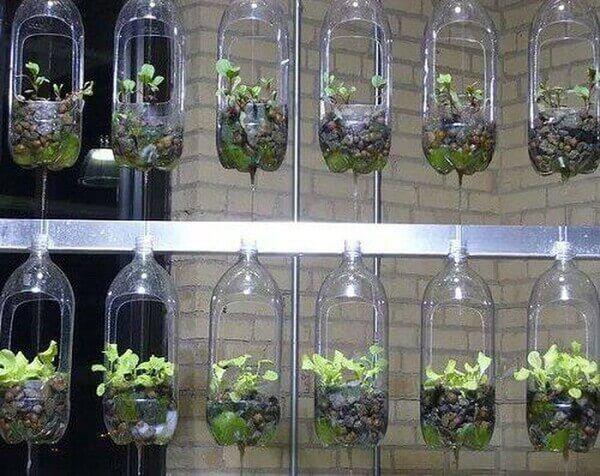 Trồng rau thủy canh bằng chai nhựa để trang trí