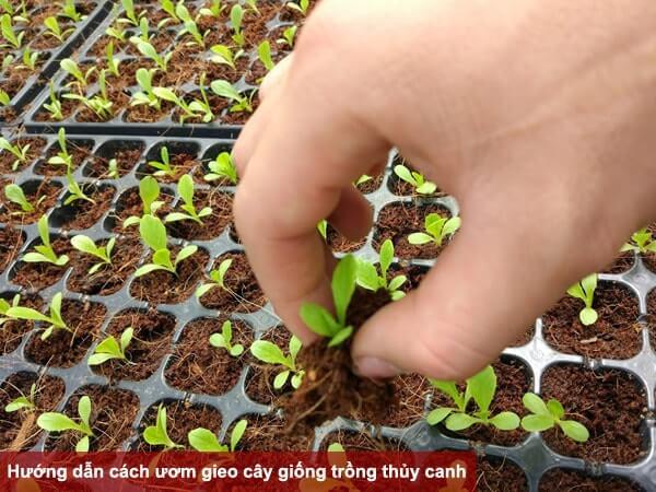 Ươm hạt giống