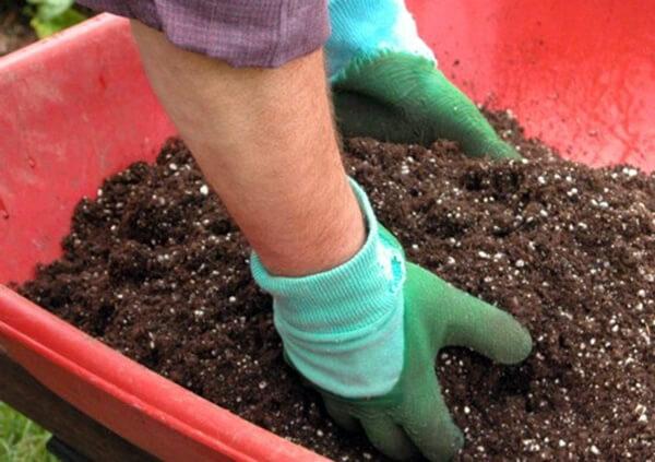 Chuẩn bị đất trồng