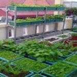 4 mô hình trồng rau sạch tại nhà
