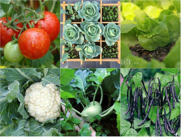 Các loại rau nên trồng tại nhà